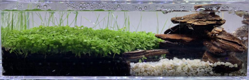 100均クリアケース水草に水を投入